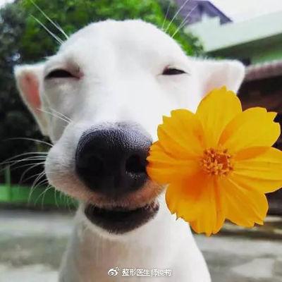 有趣的动物鼻子(一)