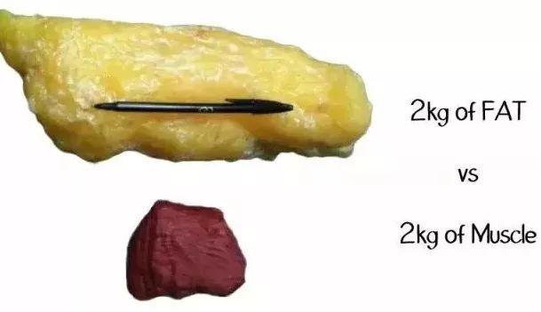 (2公斤脂肪与两公斤肌肉的对比)