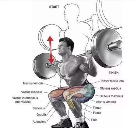 常用的肩部、腿部、腿部动作练习图解,让你从此告别瞎练!