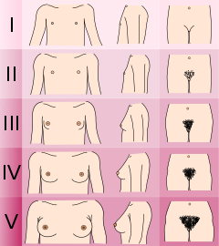 240px-Tanner_scale-female_svg.png