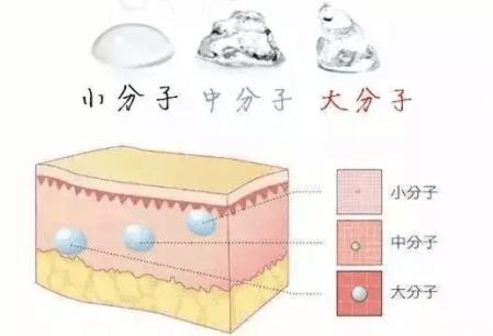 透明质酸的作用