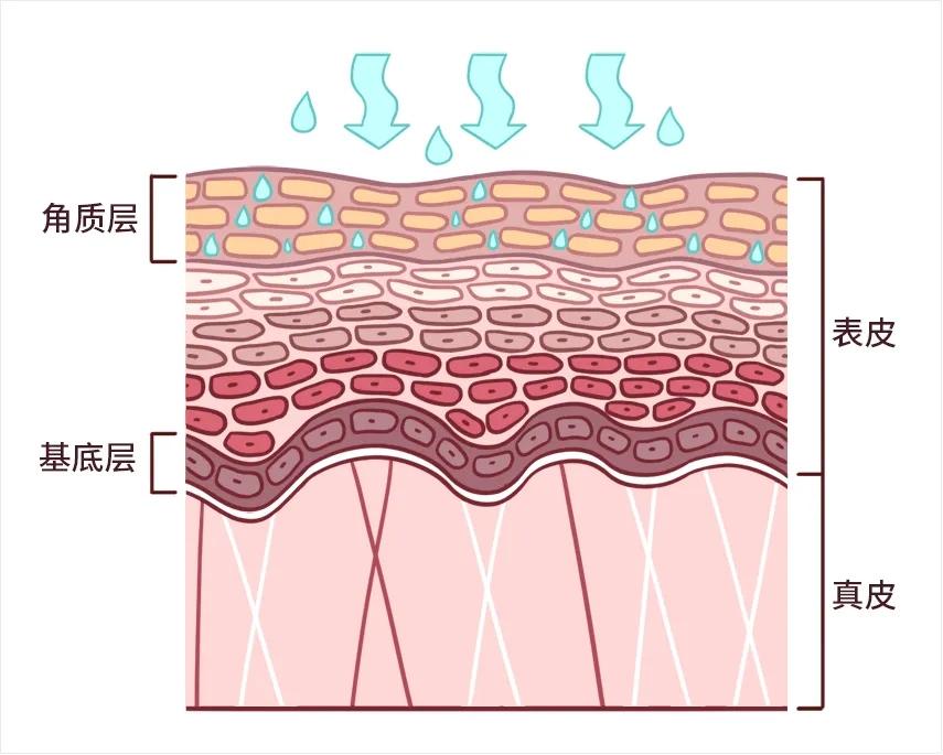 你脸上的细菌,真的会让皮肤变差吗?