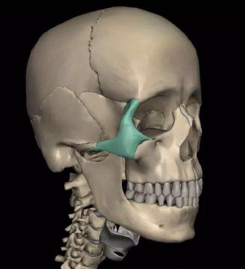 浅谈颧骨对于容貌的影响及改善方式